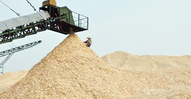 Xuất khẩu dăm gỗ: Khi nào áp thuế xuất khẩu?
