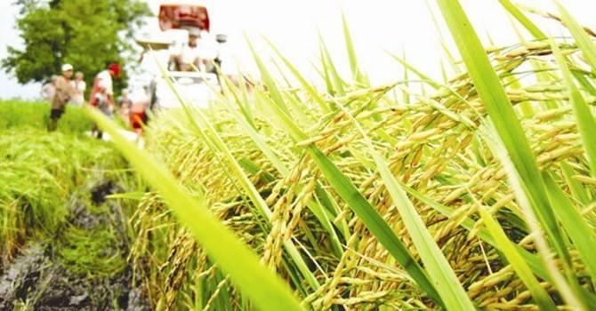 [Infographic] Nhìn lại tình hình xuất khẩu gạo của Việt Nam