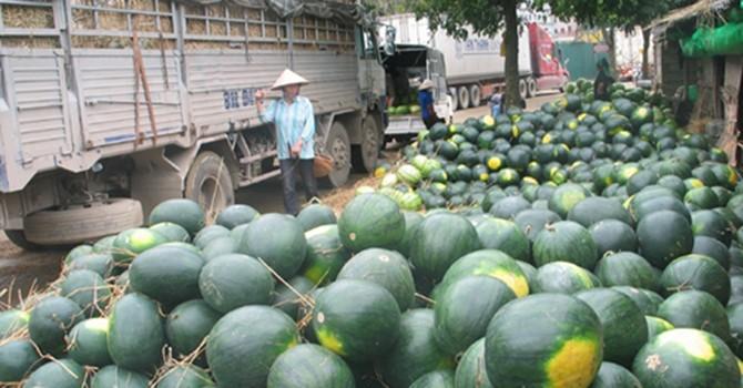Ách tắc nông sản: Một phần lỗi quy hoạch ở địa phương