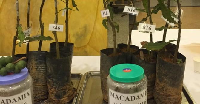 """Cây trồng cực """"hot"""", ba năm vẫn chưa xong quy hoạch"""