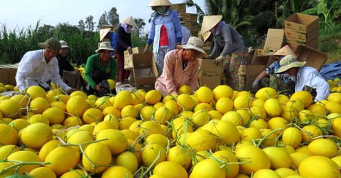 Lỗ hổng quy hoạch nông sản