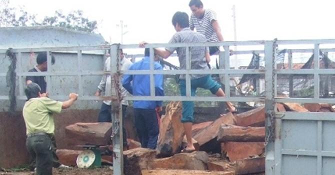 Bắt giữ xe vận chuyển gỗ trắc trị giá hàng tỷ đồng