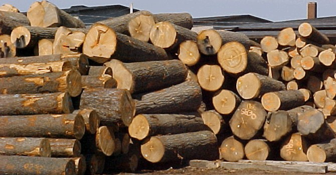 Kim ngạch xuất khẩu gỗ Việt Nam tăng mạnh