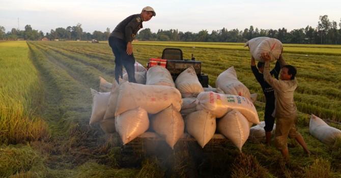 Xuất gạo giảm, nhập bắp tăng