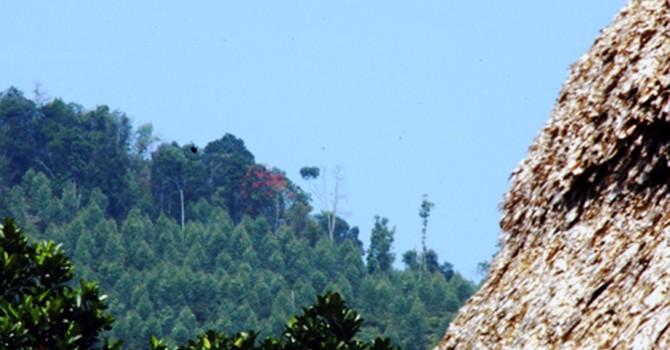 Thu hồi 1.000 ha đất rừng cho công ty Trung Quốc thuê