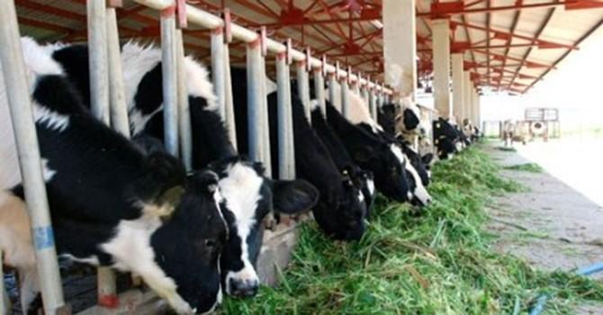 Thêm 45 triệu USD cho ngành thực phẩm tại Việt Nam