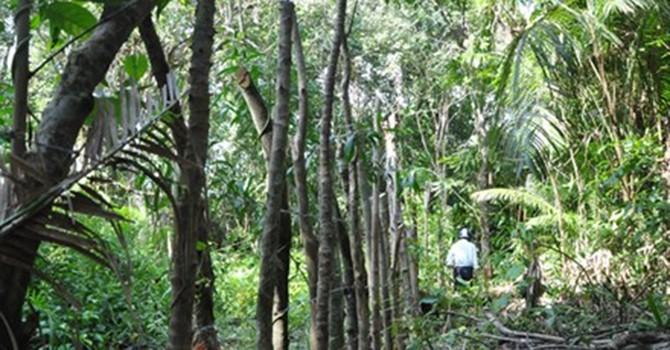 """Lại """"nóng"""" chặt rừng, chiếm đất công ở Phú Quốc"""