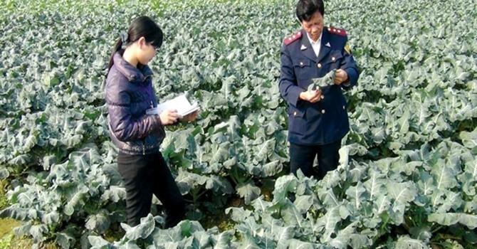 Thị trường thuốc bảo vệ thực vật: Lo ngại từ Thông tư 21