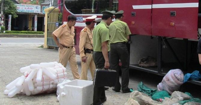 Quảng Bình: Bắt giữ vụ vận chuyển động vật rừng không rõ nguồn gốc số lượng lớn