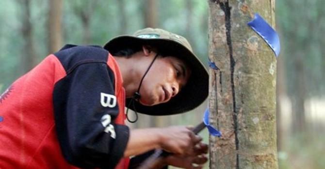 Thái Lan muốn Việt Nam gia nhập tập đoàn cao su