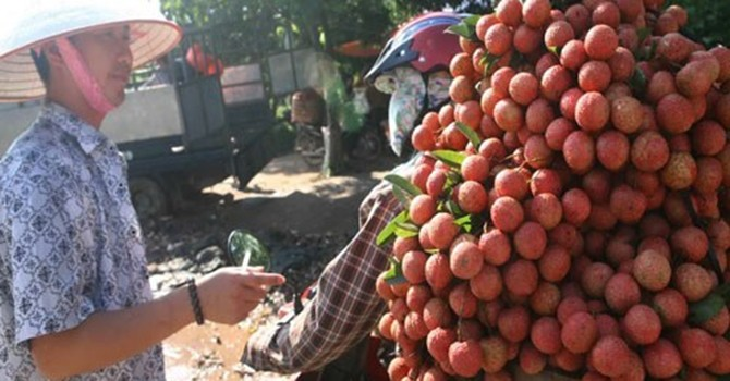 Báo Pháp: Trái vải Việt Nam tìm được thị trường mới sau khi bị Trung Quốc quay lưng