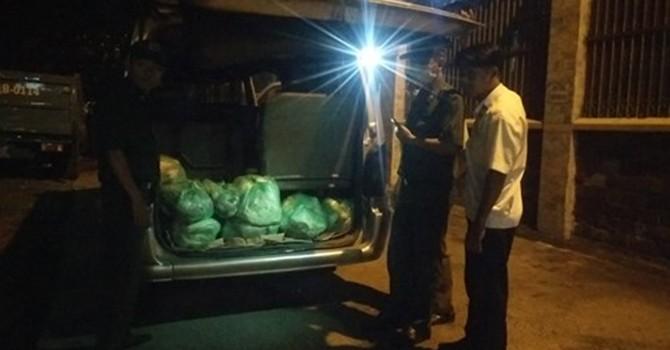 Bắt xe khách chở hơn nửa tấn thịt heo thối vào Sài Gòn tiêu thụ