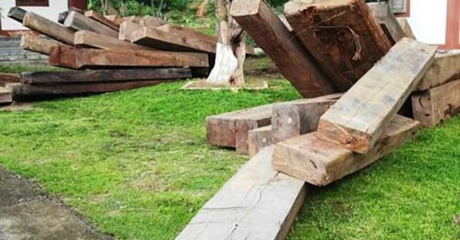 Đề xuất xử phạt chủ gỗ lậu từ 30 – 50 triệu đồng