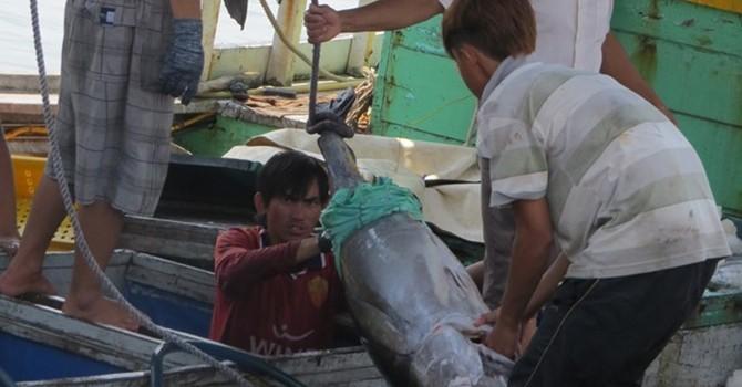 Việt Nam hợp tác với Philippines khai thác, chế biến cá ngừ