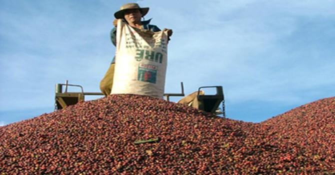 Xuất khẩu cao su, cà phê cùng sụt giảm