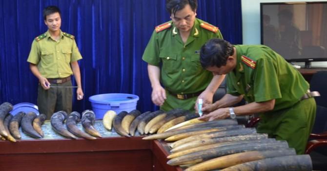 Lào Cai bắt 106kg sừng động vật