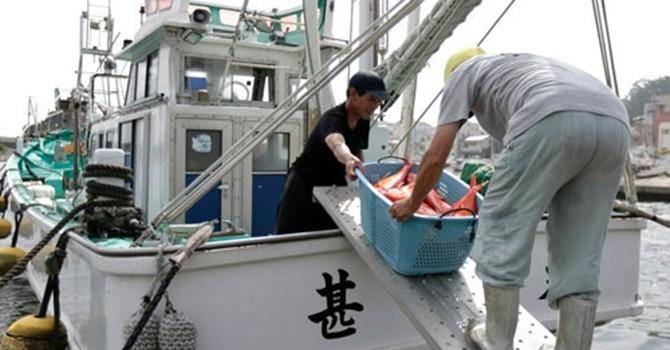 Dân Nhật ăn nhiều thịt khiến cá Nhật tung hoành châu Á