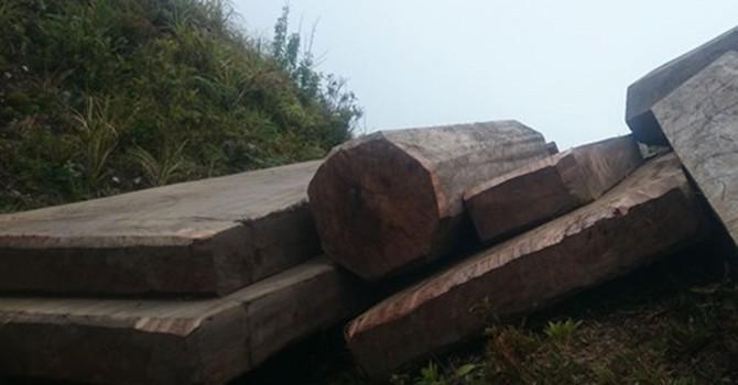 """Thâm nhập đường dây phá rừng: """"Phù phép"""" gỗ rừng thành gỗ nhà"""