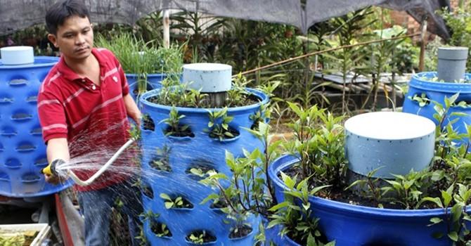 Mô hình trồng rau sạch từ rác giá 1 triệu đồng