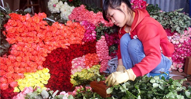 Hoa hồng Đà Lạt tăng giá gấp 3-4 lần trước ngày 20/10