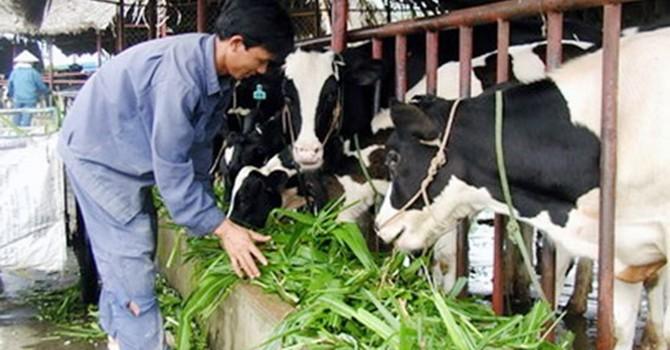 Hanoi milk, TH true milk, IDP... sẵn sàng dàn trận