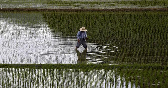 Nhật Bản dỡ bỏ thuế quan cho hơn 95% hàng nhập khẩu theo TPP