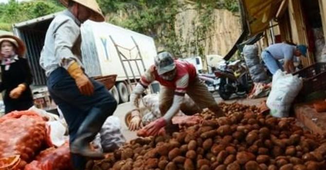 Đà Lạt cấm khoai Trung Quốc vào chợ: Khó vẫn muốn làm