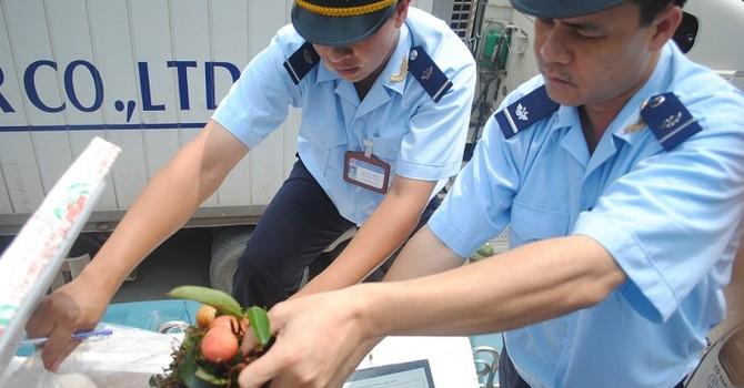 Xuất khẩu nông sản Việt khó thoát phụ thuộc Trung Quốc