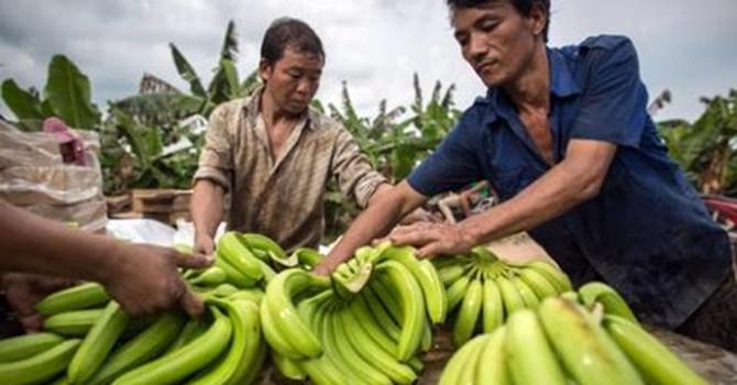 Trung Quốc thuê đất, đưa dân hiện diện sâu rộng tại Lào-Campuchia