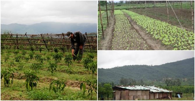 Ảnh hưởng quốc phòng, Đà Nẵng hủy dự án trồng rau của người Trung Quốc