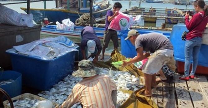 Sẽ khởi kiện doanh nghiệp xả thải gây chết cá hàng loạt