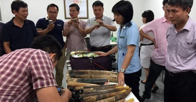 Bắt giữ gần 2 tạ ngà voi tại sân bay Nội Bài