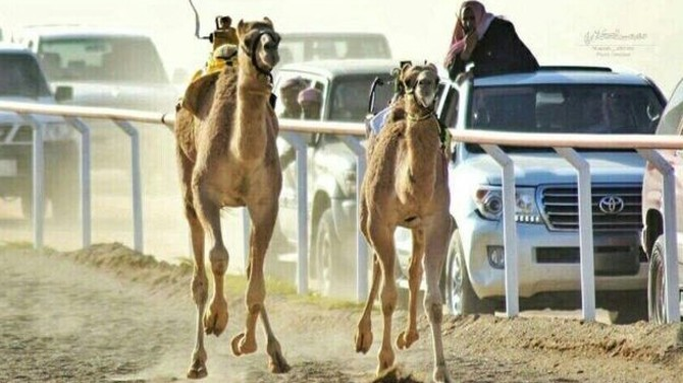 Đua lạc đà: Thị trường trị giá triệu đô tại Trung Đông