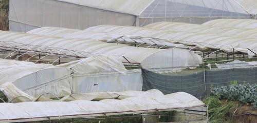Lốc xoáy làm sập hàng chục hecta nhà kính ở Đà Lạt