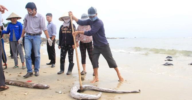 Biển miền Trung: Cá vẫn chết, không thấy đoàn kiểm tra... lấy mẫu!