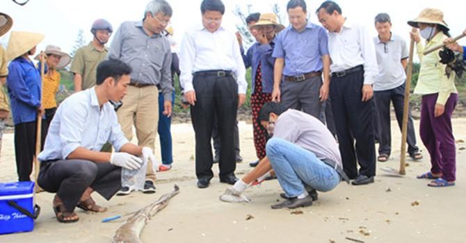Vụ cá chết hàng loạt: Nghi vấn ống xả thải khổng lồ của Formosa dưới biển Vũng Áng