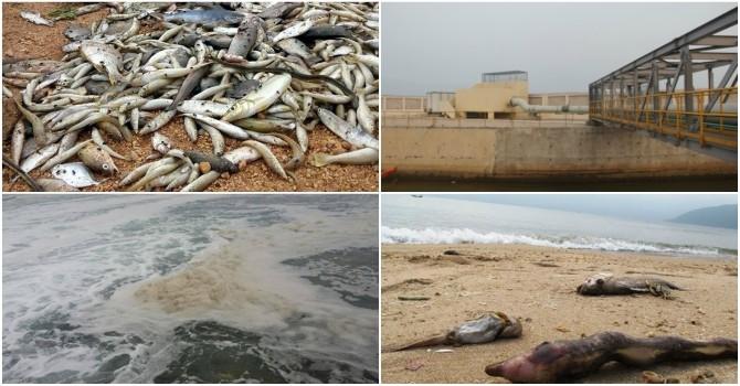 Vụ cá chết hàng loạt: Bao giờ mới tìm được nguyên nhân?