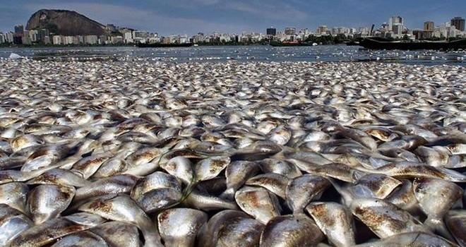 Báo động tình trạng cá chết hàng loạt khắp nơi trên thế giới