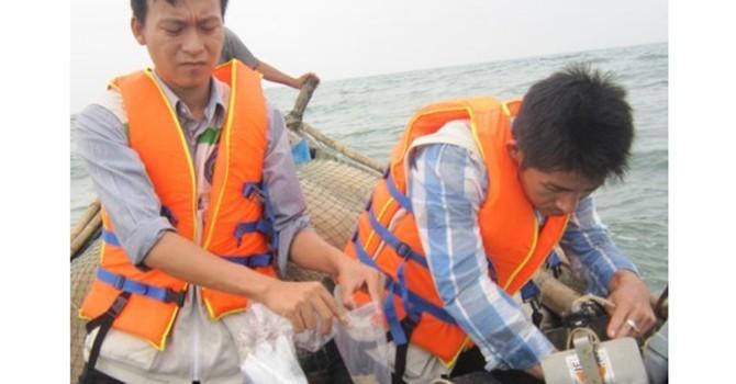 Đã có kết luận cá biển chết ở Thừa Thiên Huế