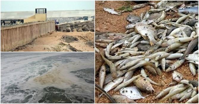 Vụ cá chết hàng loạt: Bộ Tài nguyên và Môi trường họp kín