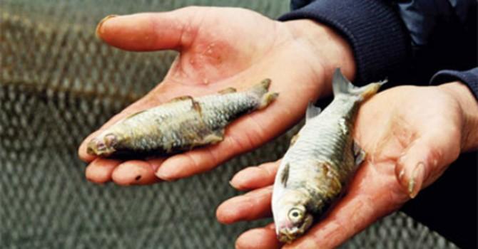 Cá chết trắng sông vì nhiễm độc, Trung Quốc xử lý thế nào?