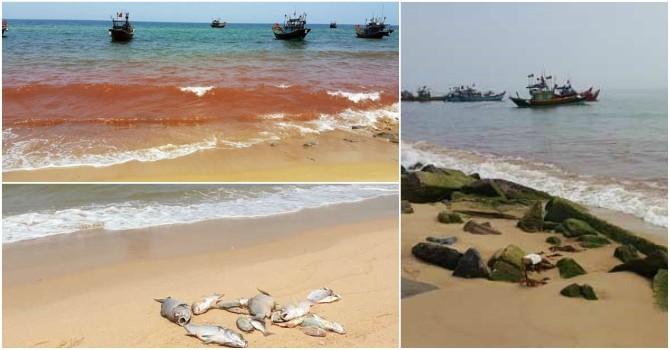 Chính thức kiểm tra Formosa, bờ biển Quảng Bình xuất hiện vệt nước đỏ 1,5 km