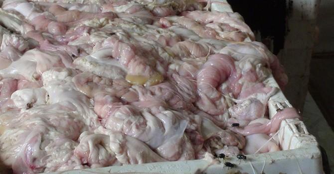 Ghê rợn luộc lòng heo bằng bột Trung Quốc để kích nở 40%