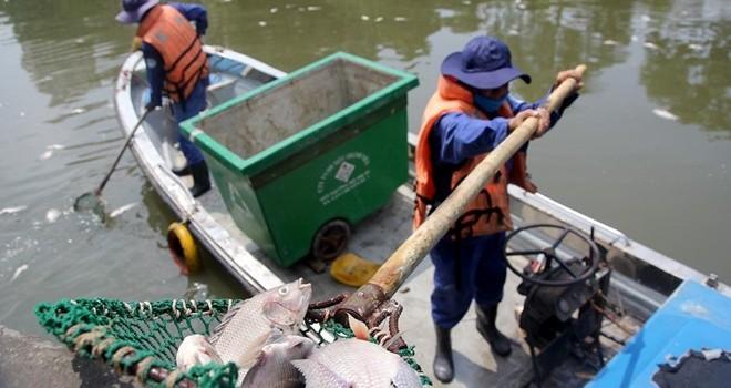 Cá chết hàng loạt ở Sài Gòn do mưa lớn đẩy chất thải ra kênh