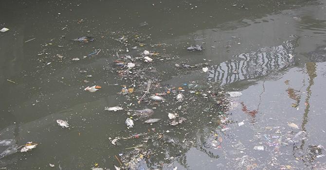 Cá chết nổi khắp kênh Nhiêu Lộc - Sài Gòn