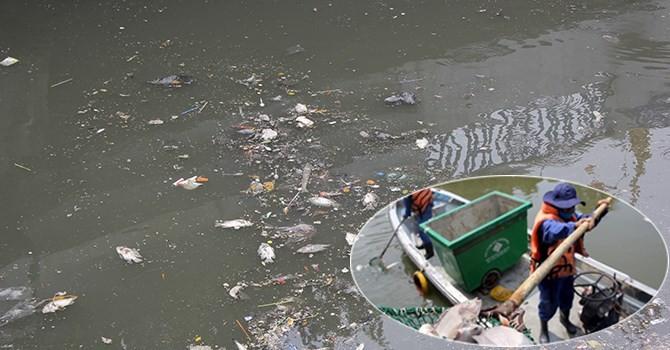 Vì sao cá chết hàng loạt tại kênh Nhiêu Lộc - Thị Nghè?