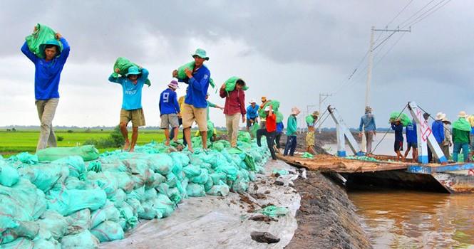 Nguy cơ tan rã Đồng bằng sông Cửu Long: Xác định lại chiến lược an ninh lương thực