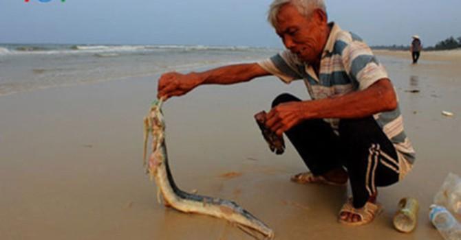 Ngư dân chỉ mong đi biển, sống bằng ngư trường quen thuộc của mình