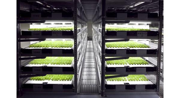 Nông dân trồng rau cũng sắp thất nghiệp do robot làm việc hiệu quả hơn
