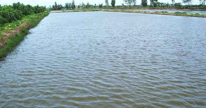 """Lộ diện 72 doanh nghiệp được cấp giấy phép """"ma"""" trong nuôi trồng thủy sản"""